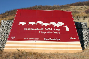 BuffaloJumpHeadSmashed2